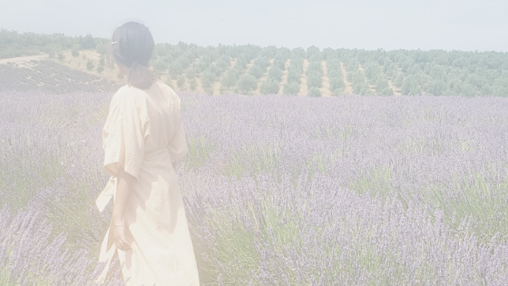 Lavender filed in provence (valensole)