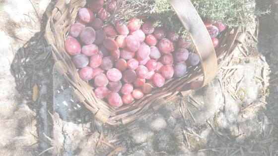 homemade plum jam recipe